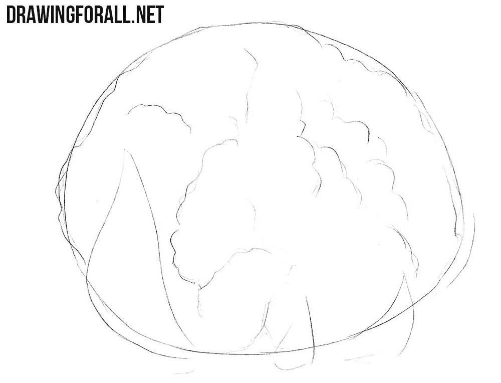 How to draw a cauliflower easy