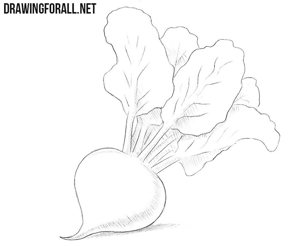 How to draw a beet