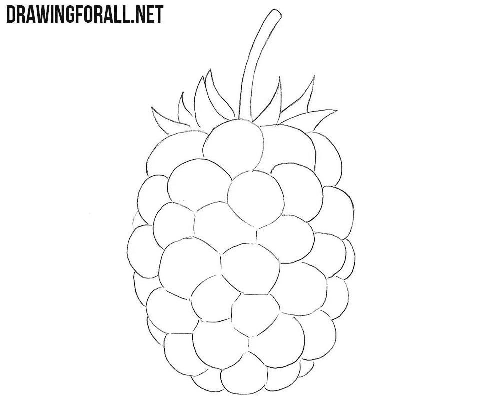 How to draw a blackberry easy