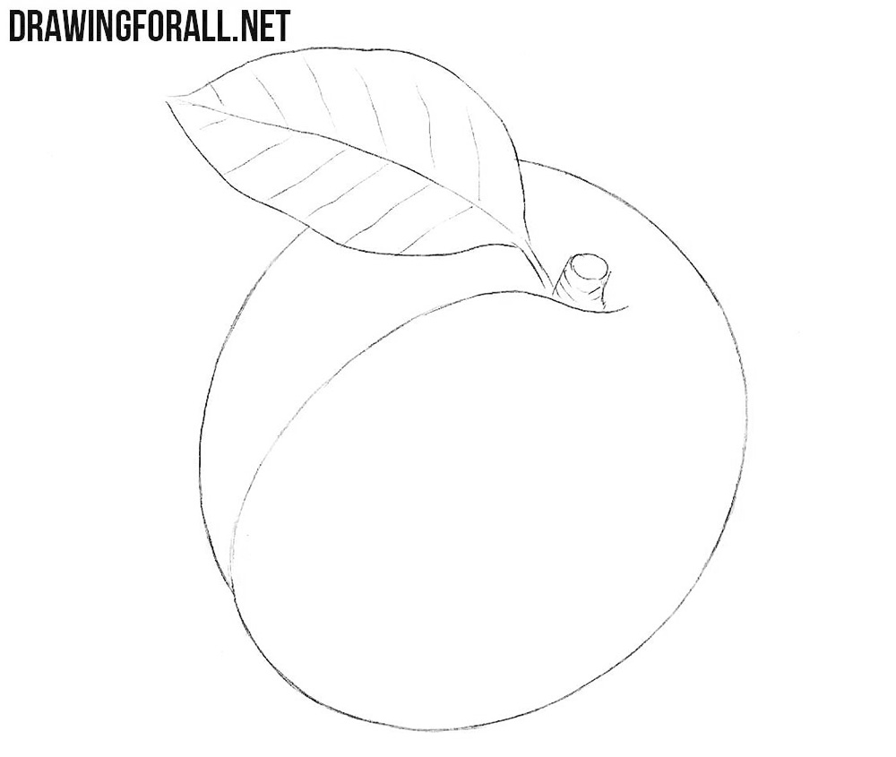 How to draw an apricot step by step easy