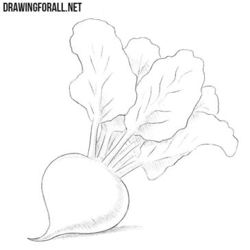 How to Draw a Beetroot