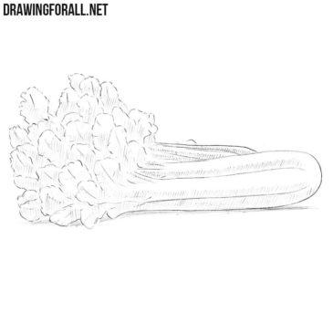 How to Draw a Celery