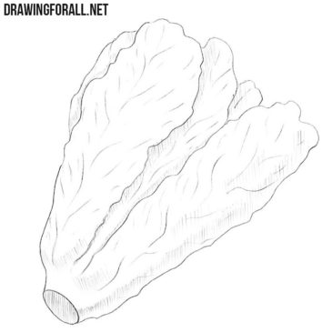 How to Draw a Lettuce