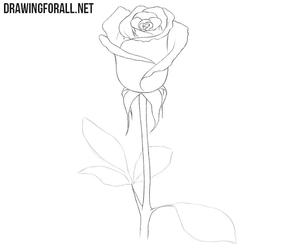 How to draw a rose and stem