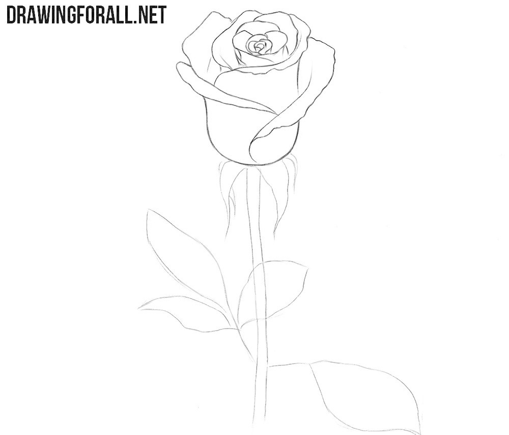 How to draw a rose for beginners easy