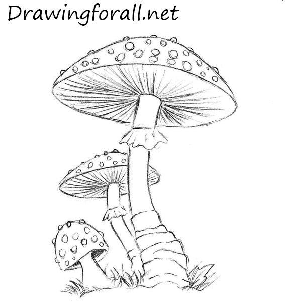 mushrooms pencile drawings