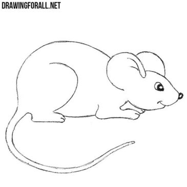 How to Draw a Mouse For Beginners