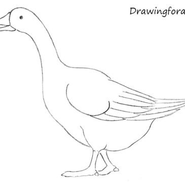 How to Draw a Goose for Beginners