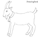 How to Draw a Goat for Beginners