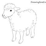 How to Draw a Sheep for Kids