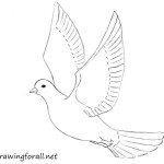 How to Draw a Dove for Beginners
