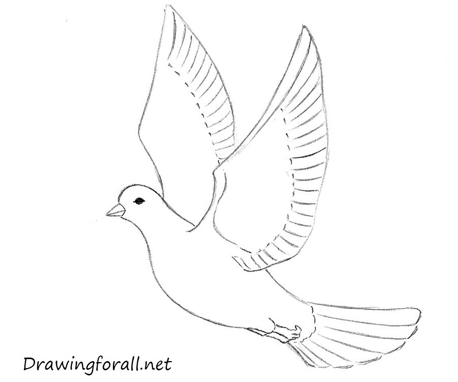 How To Draw A Dove For Beginners | Drawingforall.net