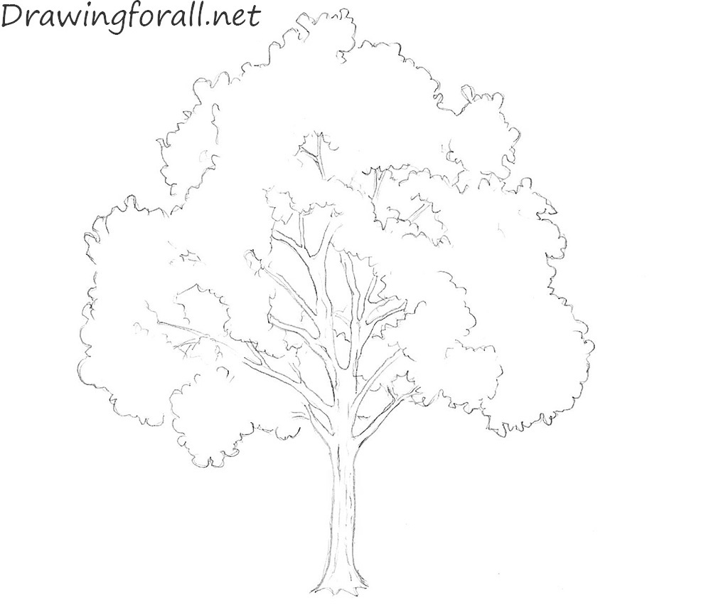 How to Draw a Tree for Beginners | Drawingforall.net