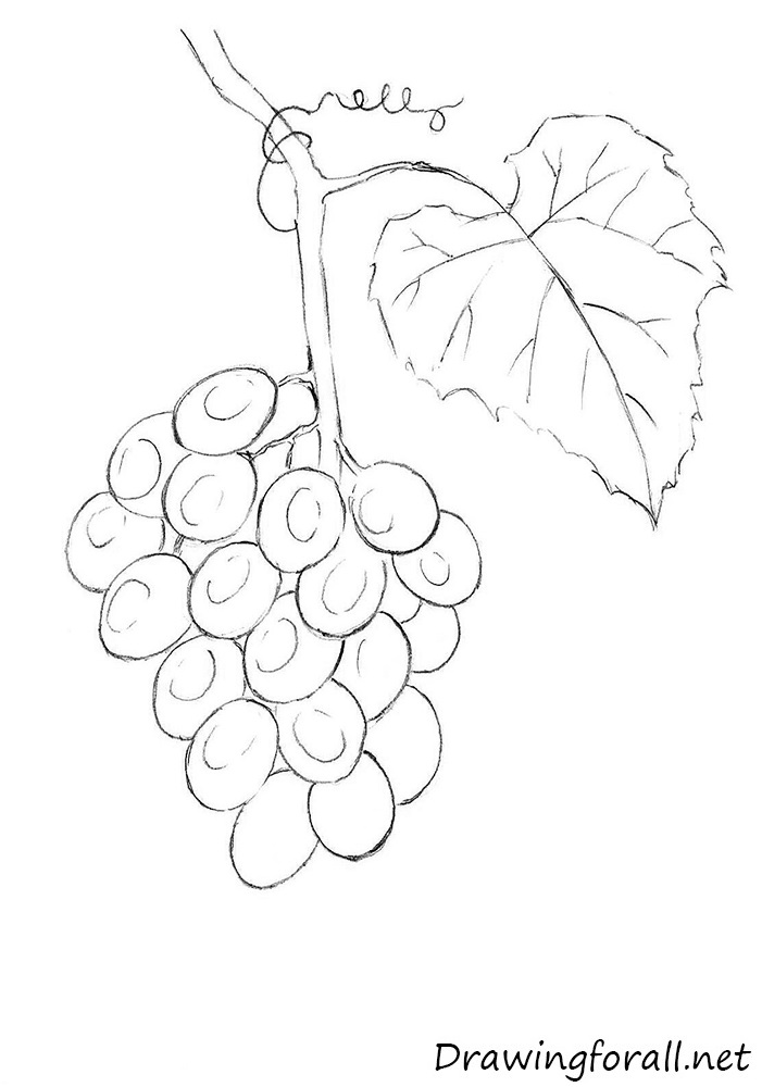 Outline Pictures Of Grapes