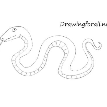 How to Draw a Cartoon Snake