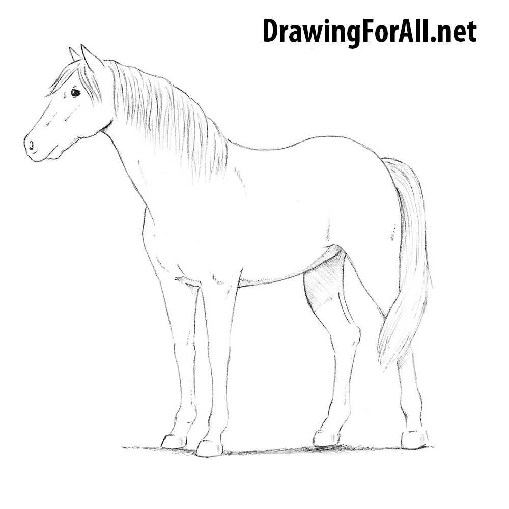 How to draw a horse drawingforall net