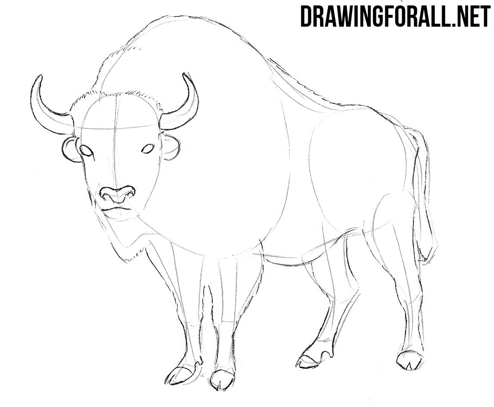 This is a picture of Unusual Drawing Of A Buffalo