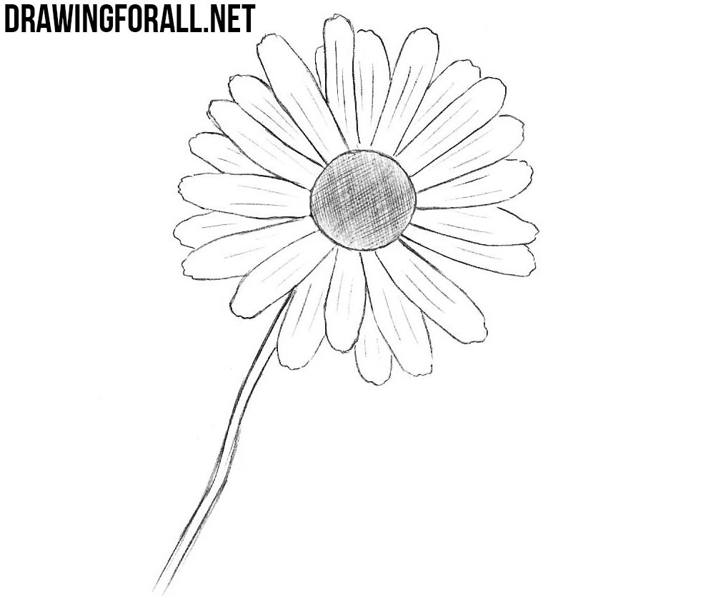 How to Draw a Flower Easy | Drawingforall.net