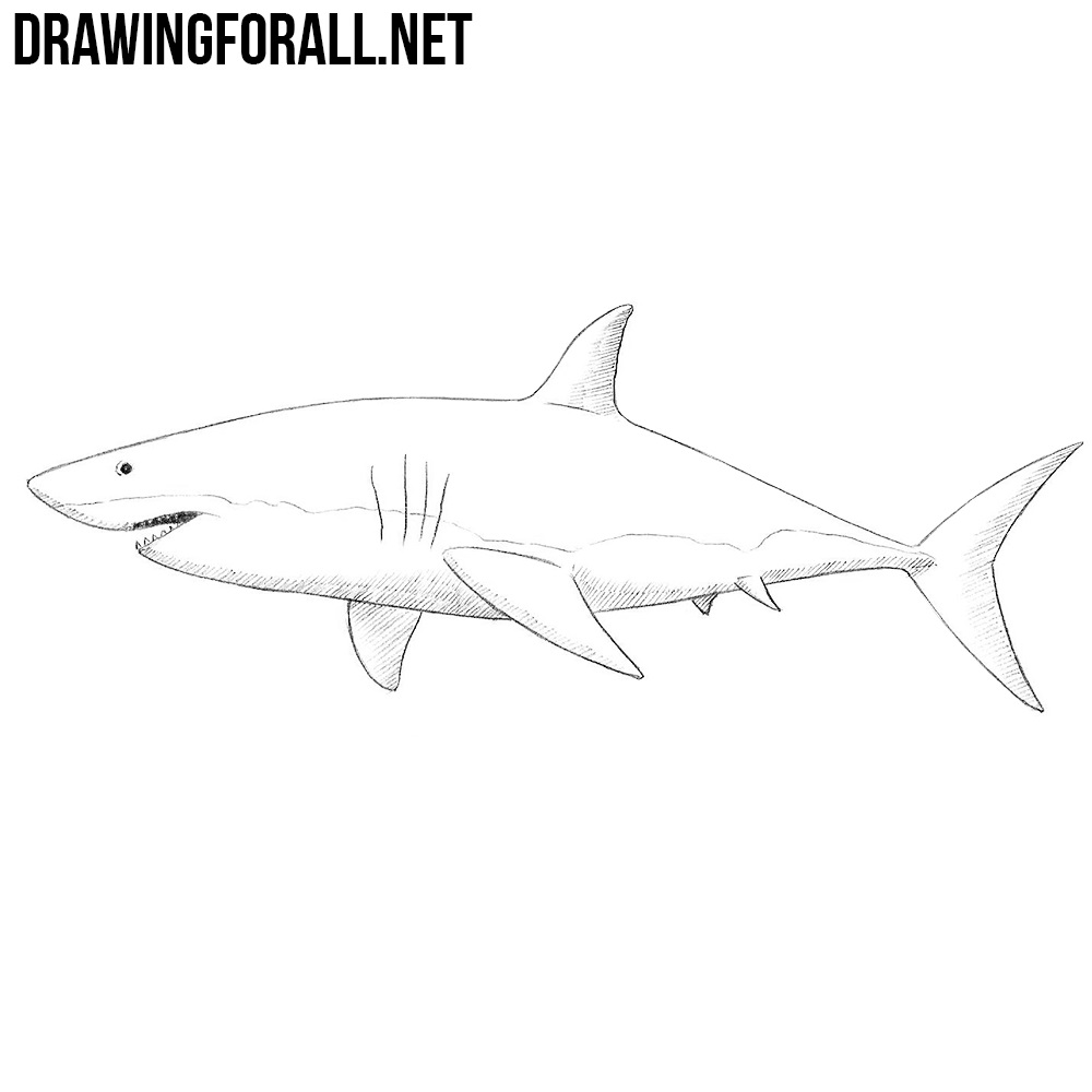 How to draw a shark drawingforall net