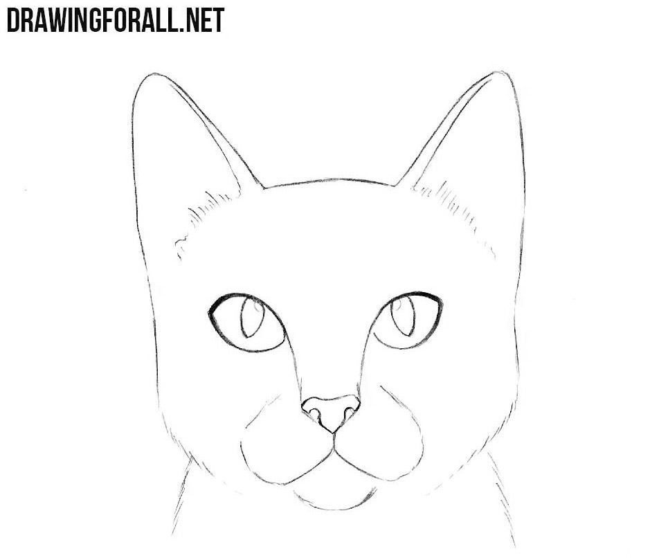 This is an image of Exceptional Drawing Cat Face