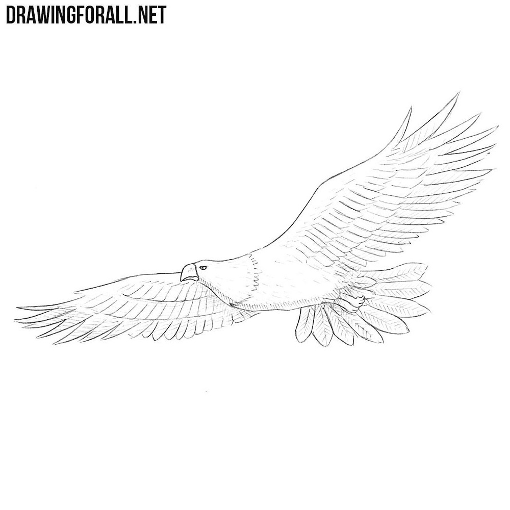 How to draw a bald eagle drawingforall net