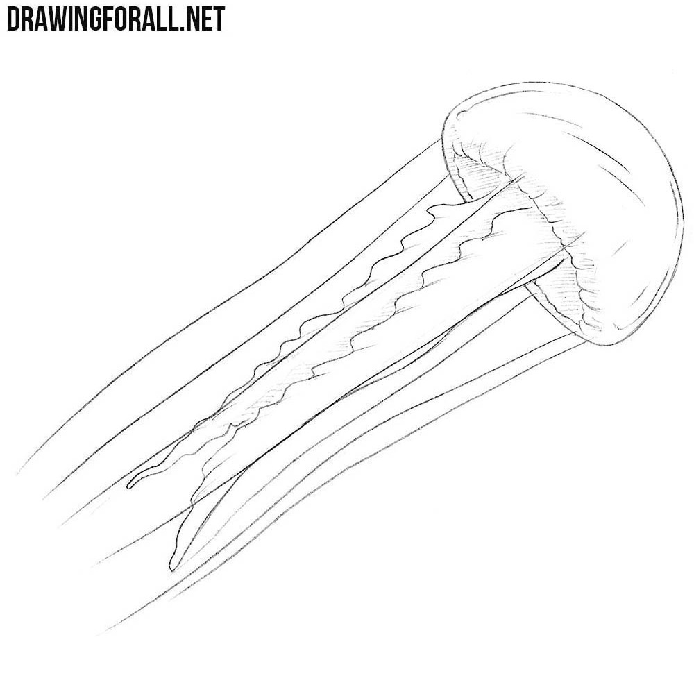 It is a picture of Geeky Jellyfish Line Drawing