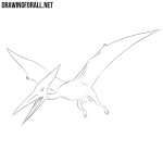How to Draw a Pterodactylus