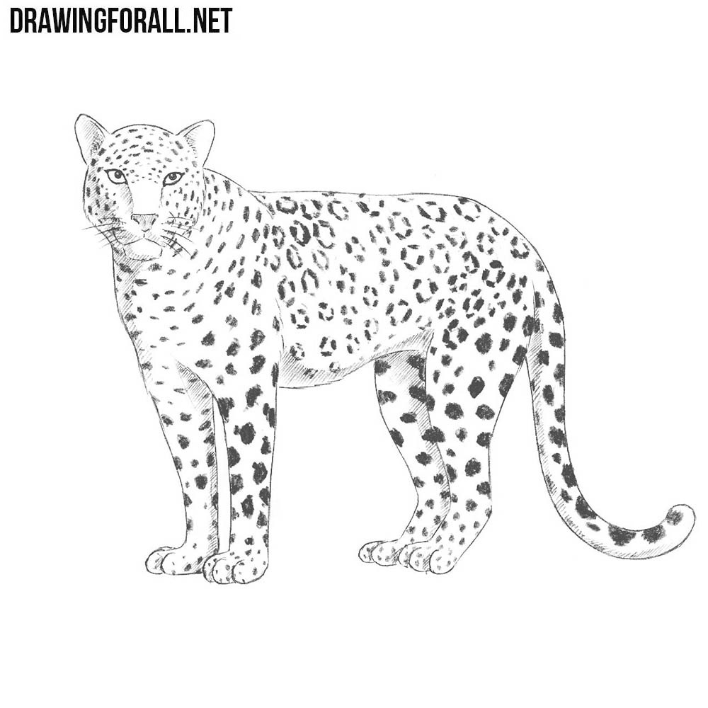 How To Draw A Leopard Drawingforall Net