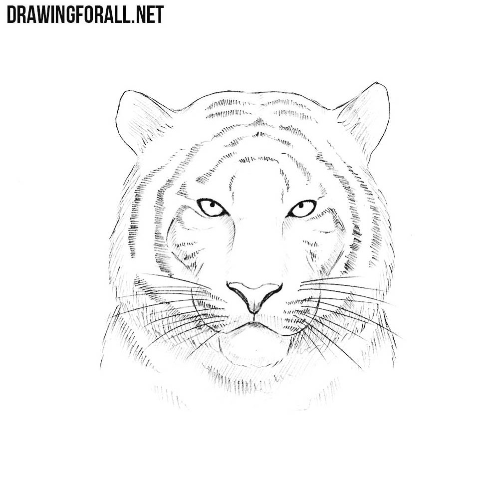 How to Draw a Tiger Head | Drawingforall.net