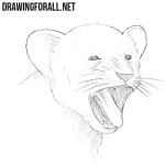 How to Draw a Yawning Lion Cub