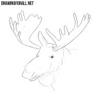 How to Draw an Elk Head