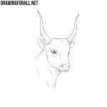 How to Draw a Bull Head