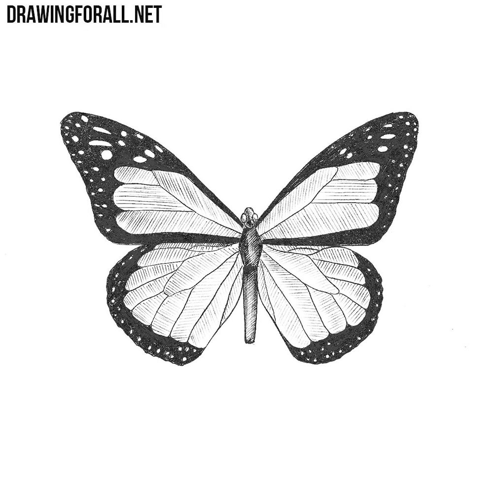 How to Draw a Butterfly   Drawingforall.net