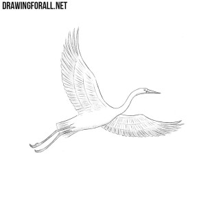 How to draw a crane bird