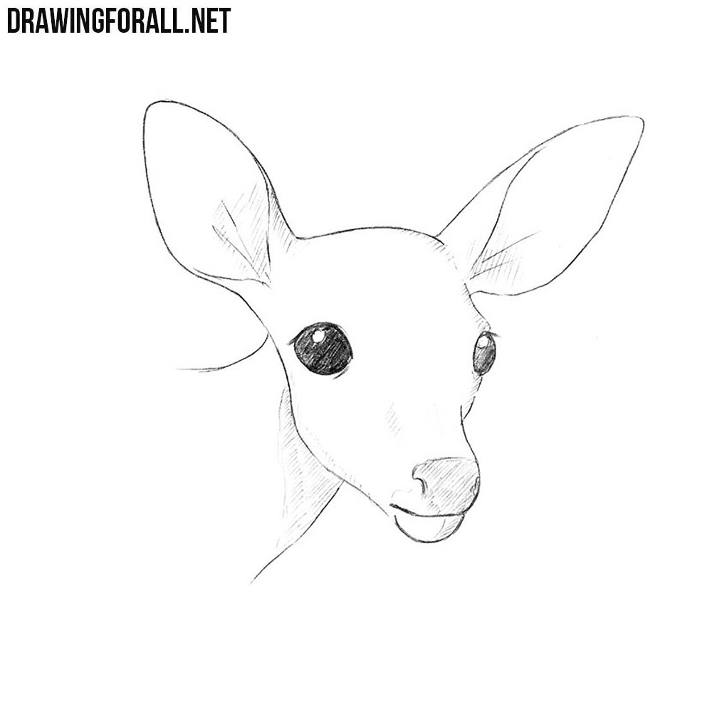 How to Draw a Deer Head | Drawingforall.net
