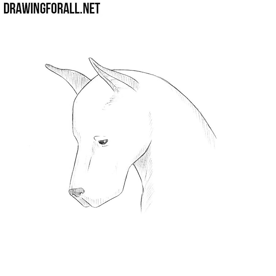 How to Draw a Dog Head | Drawingforall.net