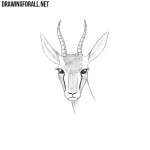 How to Draw a Gazelle Head