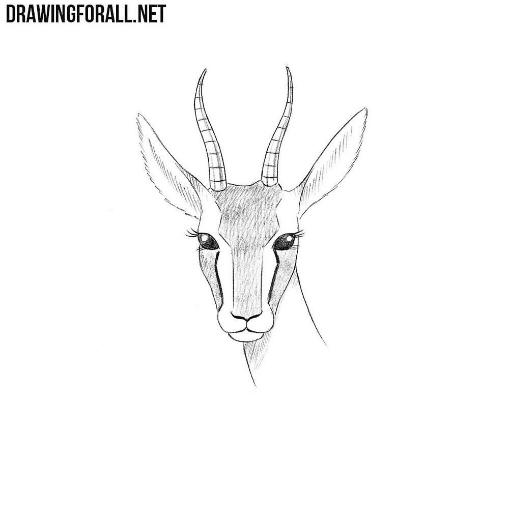 How to Draw a Gazelle Head | Drawingforall.net