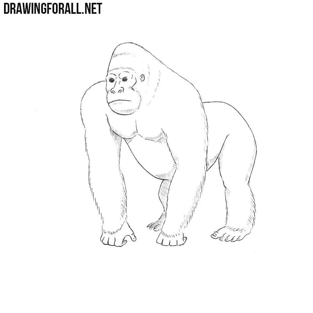 It is a graphic of Mesmerizing Drawing Of A Gorilla