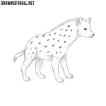 How to Draw a Hyena