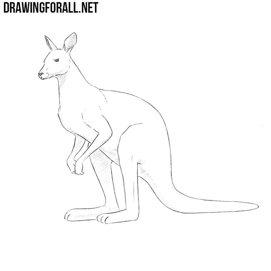 How to draw a kangaroo drawingforall net