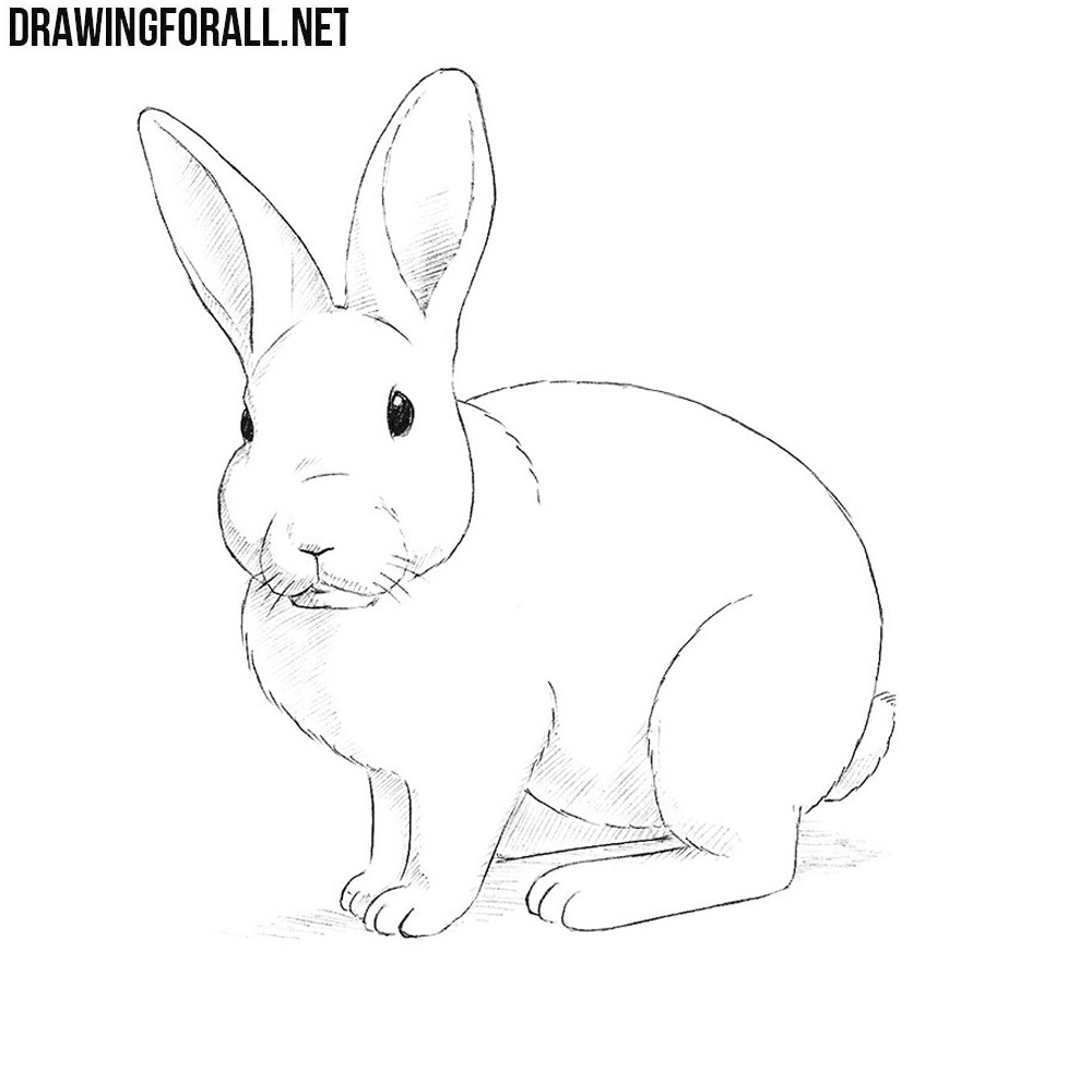 - How To Draw A Rabbit Drawingforall.net