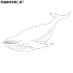 How to Draw a Whale