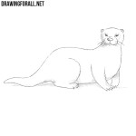 How to Draw an Otter