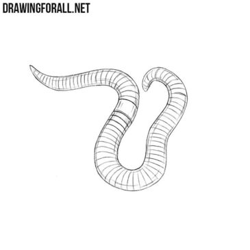 How to Draw a Worm