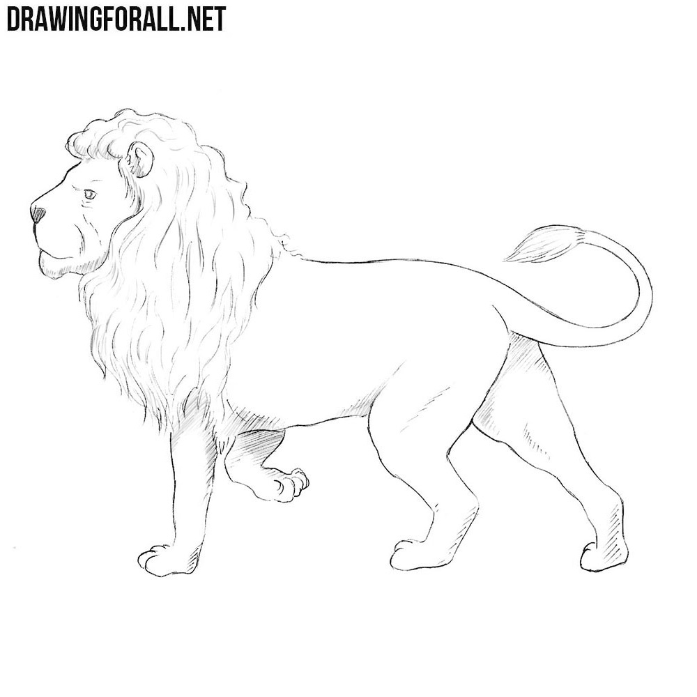 How to draw a nemean lion drawingforall net