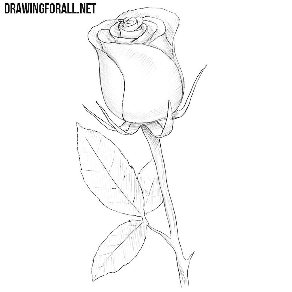 How To Draw A Rose Easy Drawingforall Net