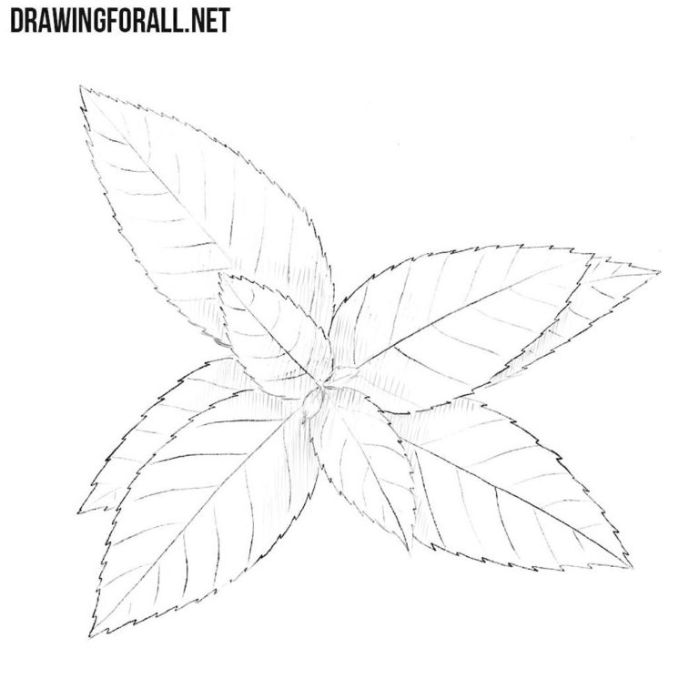 How to Draw a Peppermint