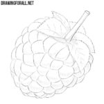 How to Draw a Raspberry