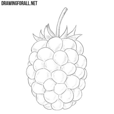 How to Draw a Blackberry